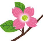 flower_hanamizuki1.png