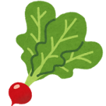 vegetable_radish_hatsuka_daikon.png